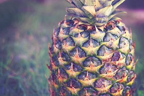 『パイナップル』のフリー写真画像[ID:3636]