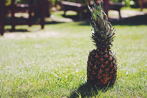 『パイナップル』のフリー写真画像[ID:3938]