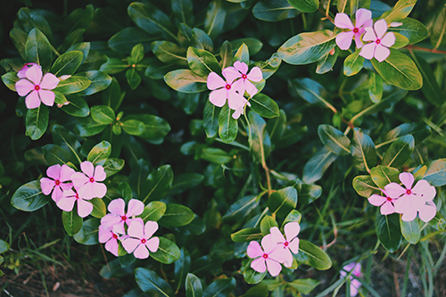 『花』のフリー写真画像[ID:3955]