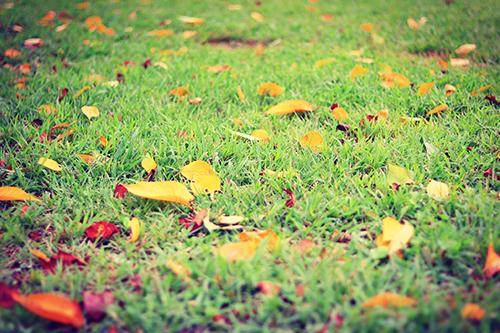 『花・植物』のフリー写真画像[ID:4110]