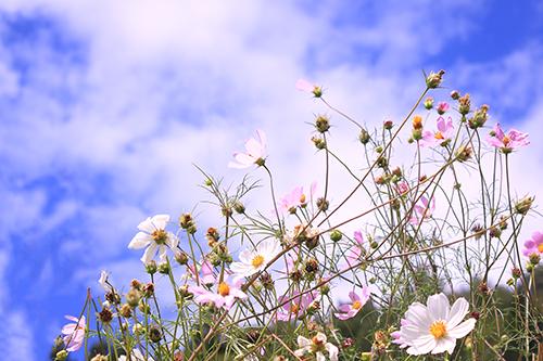 『花・植物』のフリー写真画像[ID:4118]