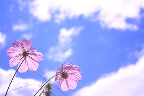 『花・植物』のフリー写真画像[ID:4114]