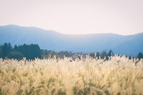『秋』のフリー写真画像[ID:4311]