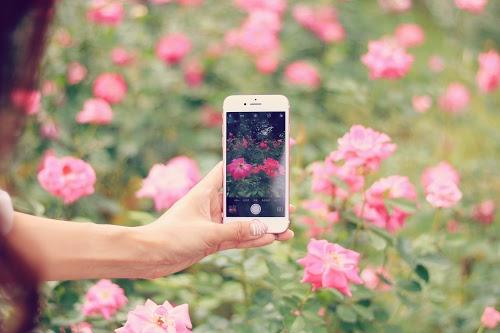 『花・植物』のフリー写真画像[ID:4251]