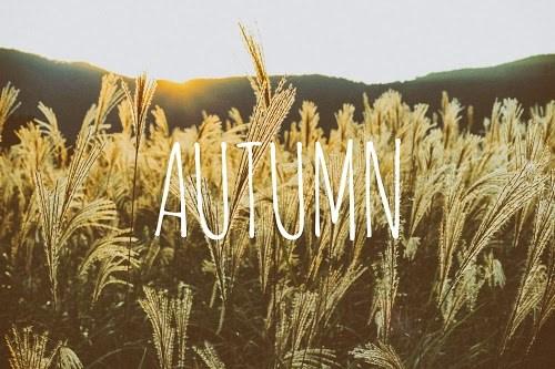 『秋』のフリー写真画像[ID:5219]