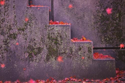 『秋』のフリー写真画像[ID:4583]