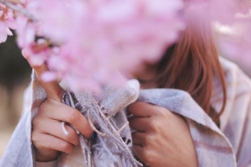 『桜』のフリー写真画像[ID:5159]