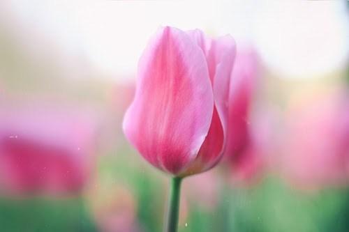 『花・植物』のフリー写真画像[ID:5319]