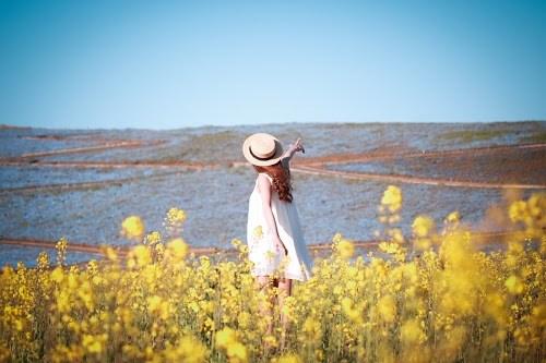 『花畑』のフリー写真画像[ID:5334]