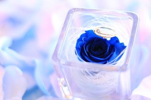 『薔薇』のフリー写真画像[ID:5249]