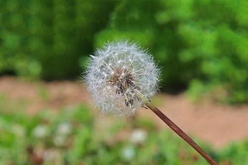 『花・植物』のフリー写真画像[ID:5289]
