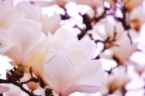 『花・植物』のフリー写真画像[ID:5292]