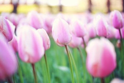 『花・植物』のフリー写真画像[ID:5322]