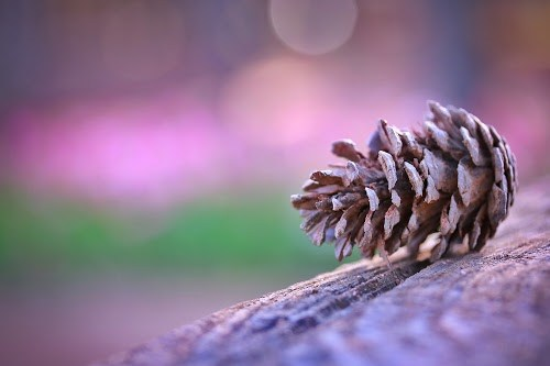 『冬』のフリー写真画像[ID:5328]