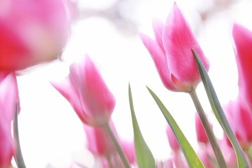 『花畑』のフリー写真画像[ID:5316]