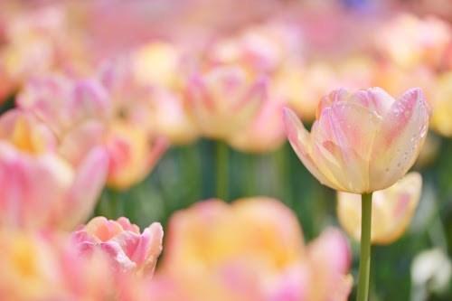 『花・植物』のフリー写真画像[ID:5310]