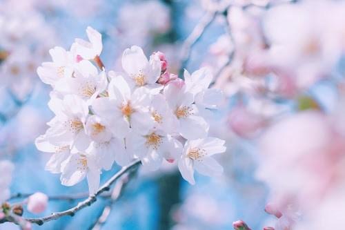 『花』のフリー写真画像[ID:5388]