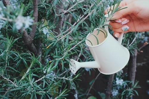 『花・植物』のフリー写真画像[ID:5512]