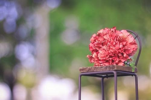 『花・植物』のフリー写真画像[ID:5628]