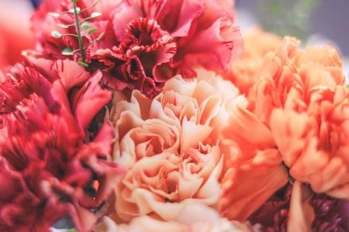 『花・植物』のフリー写真画像[ID:5625]