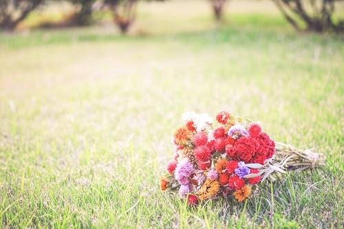 『花・植物』のフリー写真画像[ID:5589]