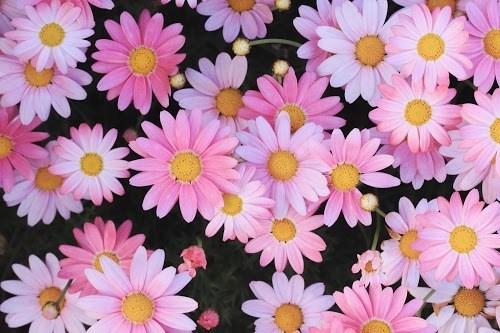 『春』のフリー写真画像[ID:5530]