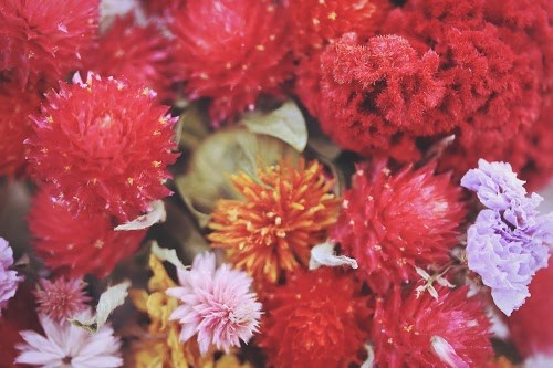 『花・植物』のフリー写真画像[ID:5525]