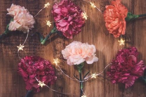 『花・植物』のフリー写真画像[ID:5563]