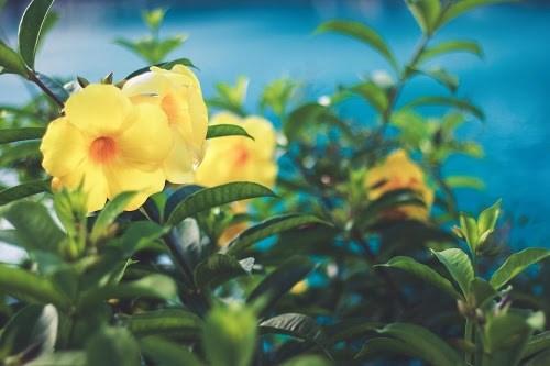 『花・植物』のフリー写真画像[ID:6251]