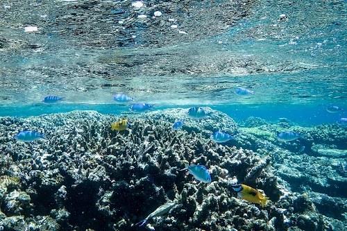 『サンゴ礁』のフリー写真画像[ID:6372]