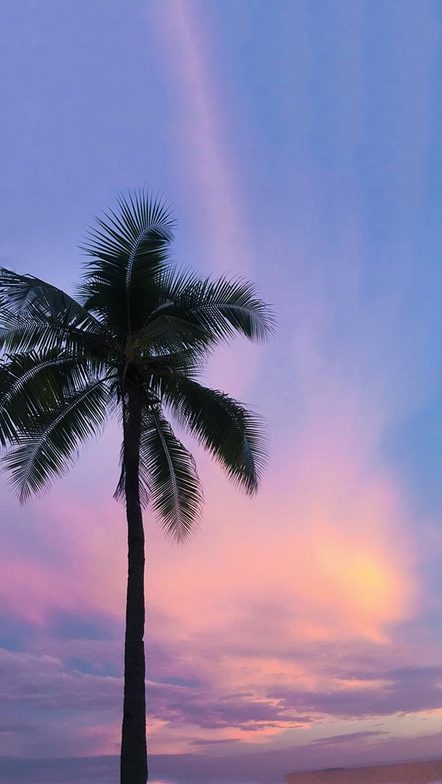 オシャレなiphone壁紙紫ピンクの夕焼け空とヤシの木の