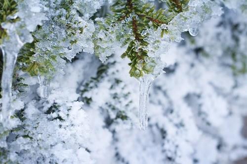 『冬』のフリー写真画像[ID:7496]