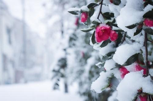 『冬』のフリー写真画像[ID:7489]