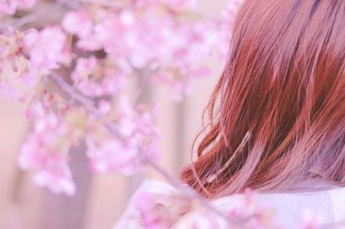 『春』のフリー写真画像[ID:8121]