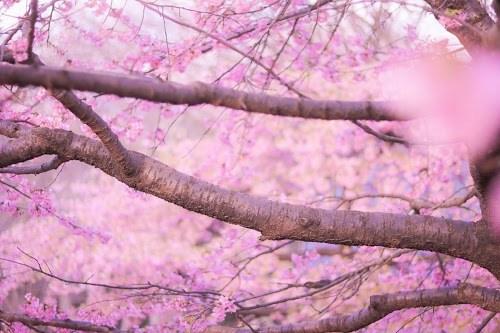 『春』のフリー写真画像[ID:8110]
