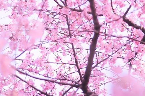 『花・植物』のフリー写真画像[ID:8114]