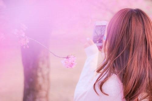『花・植物』のフリー写真画像[ID:8118]