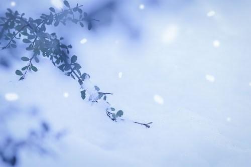 『冬』のフリー写真画像[ID:8104]