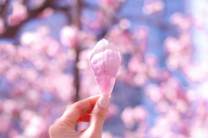 『花・植物』のフリー写真画像[ID:8268]