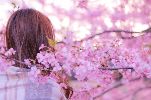 『春』のフリー写真画像[ID:8138]