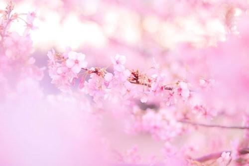 『春』のフリー写真画像[ID:8142]