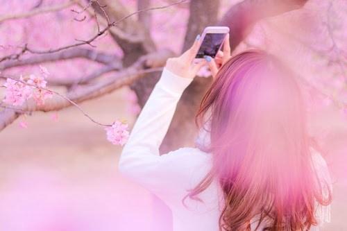 『春』のフリー写真画像[ID:8131]
