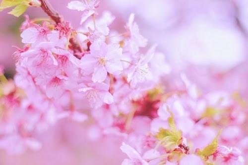 『春』のフリー写真画像[ID:8134]