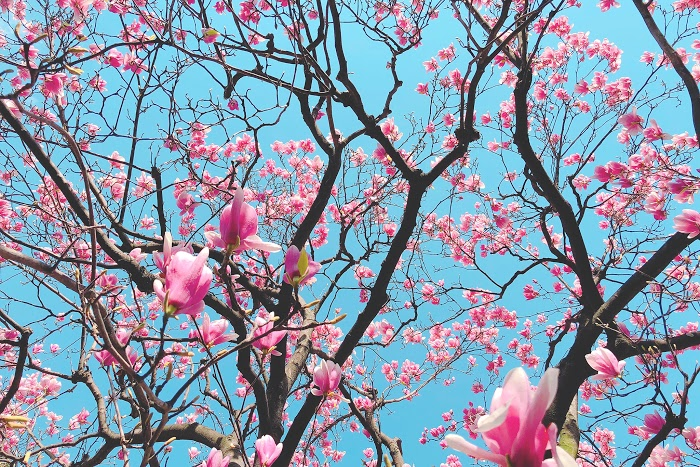 『春』のフリー写真画像[ID:8261]