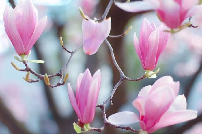 『花・植物』のフリー写真画像[ID:8265]