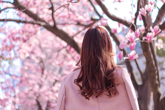 『春』のフリー写真画像[ID:8258]