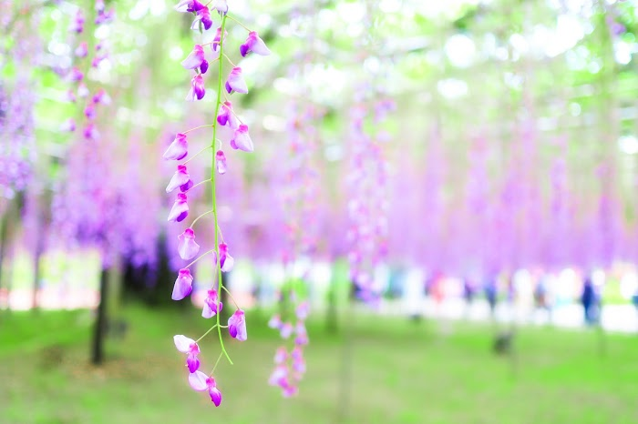 『花』のフリー写真画像[ID:8509]