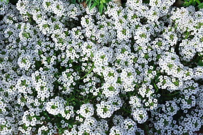 『花』のフリー写真画像[ID:8506]