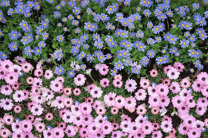 『花』のフリー写真画像[ID:8514]