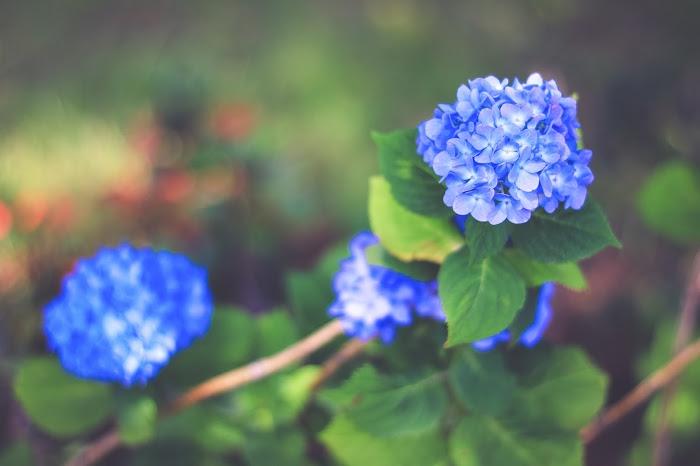『花・植物』のフリー写真画像[ID:8703]